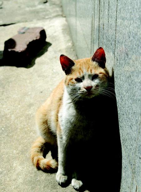 〈스포츠칸〉길고양이의 진짜 모습을 아시나요?