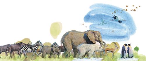 생존을 위해.. 수만년 이어져온 동물의 대이동